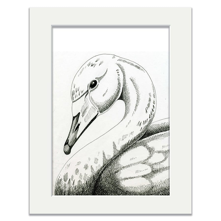 J2A9-Whooper-Swan-14-x-11-mount-for-A4-web